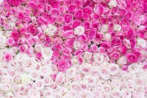 ความหมายของจำนวนดอกกุหลาบ