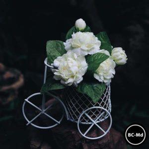 BC-Md