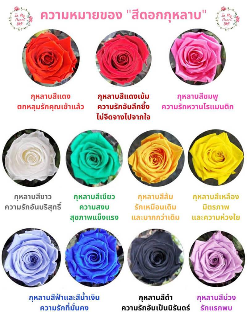 ความหมายของสีดอกกุหลาบ แต่ละสี