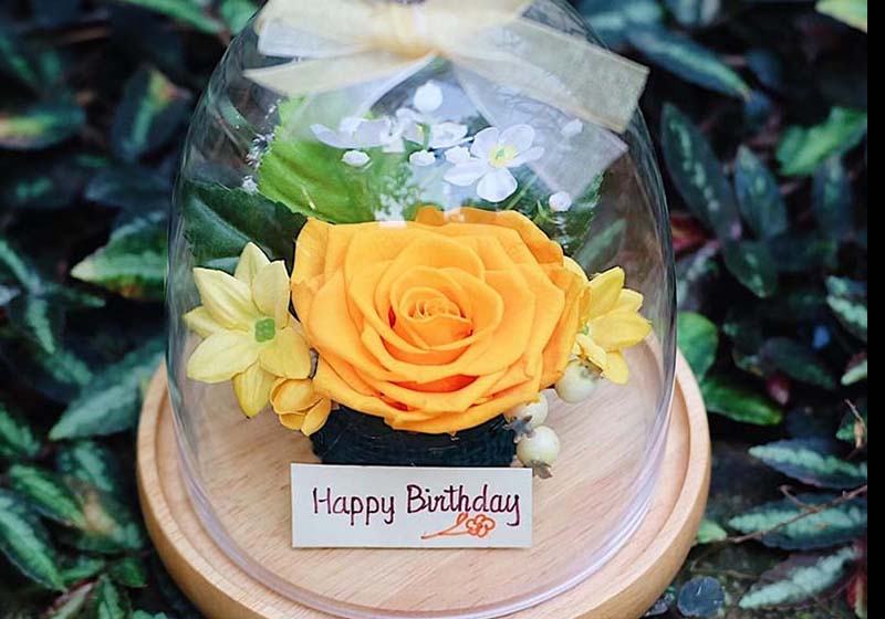 ความหมายดอกกุหลาบสีเหลือง หมายถึง มิตรภาพและความห่วงใย