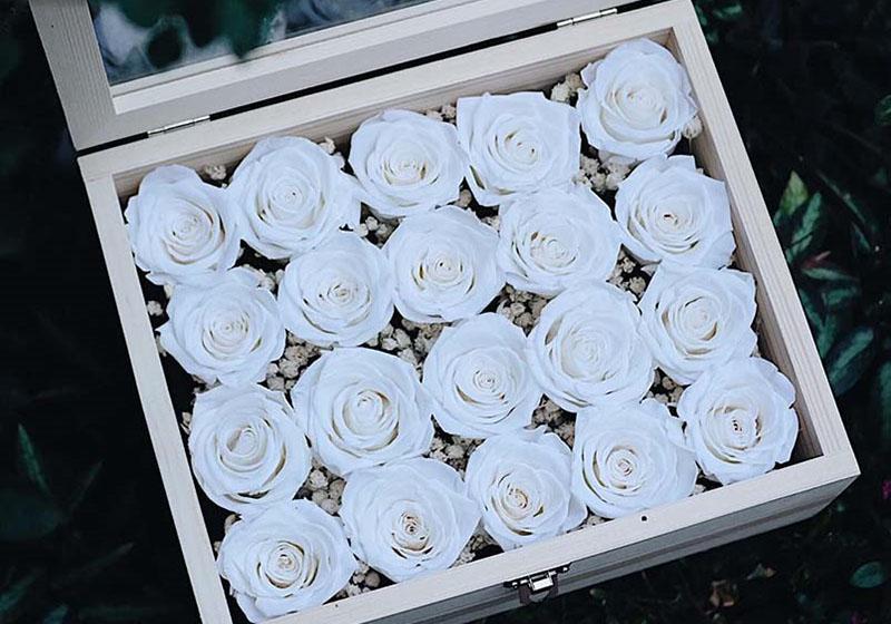 ความหมายดอกุหลาบสีขาว ความรักอันบริสุทธิ์