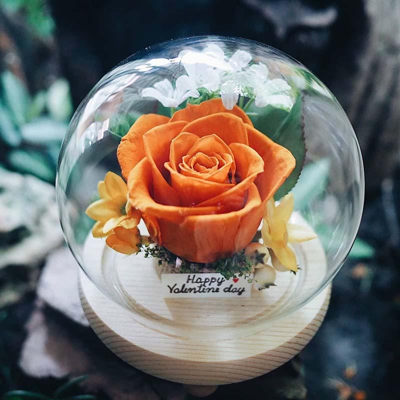 ดอกกุหลาบสีส้ม หมายถึง ความรักเหมือนเดิมและมากกว่าเดิม