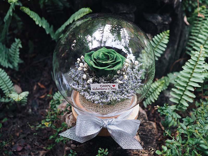 ดอกกุหลาบสีเขียว หมายถึง ความสงบ สุขภาพแข็งแรง อายุยืนยาว
