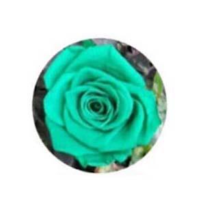 ดอกกุหลาบสีเขียว