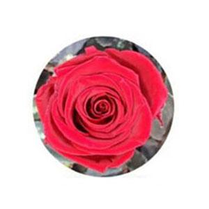 ดอกกุหลาบสีแดงเข้ม
